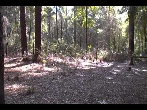 Orleans Township Cemetery - Withlacoochee State Forest