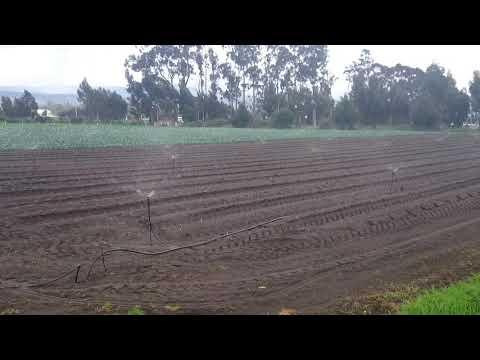 Sistema de riego a campo abierto con aspersor senninger Xcelwobbler thumbnail