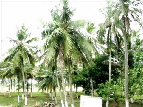 Coimbatore land