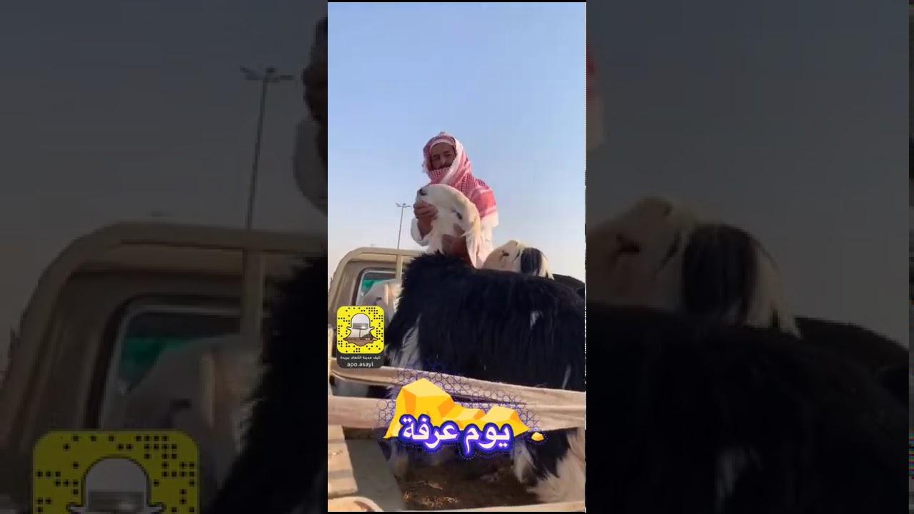 مهرجان أضحيتي 1441 بمدينة الأنعام ببريدة ..يوم عرفة.