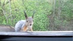Kissa ja orava kasvotusten - Tassu Jyväskylä
