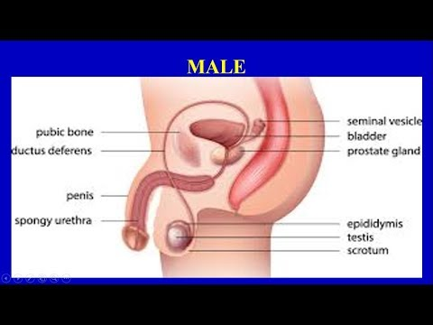Blood in the semen !!do not worry ,Come and learn about the causes, symptoms and treatment from YouTube · Duration:  8 minutes 39 seconds