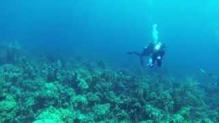 Sonar pinging when scuba diving