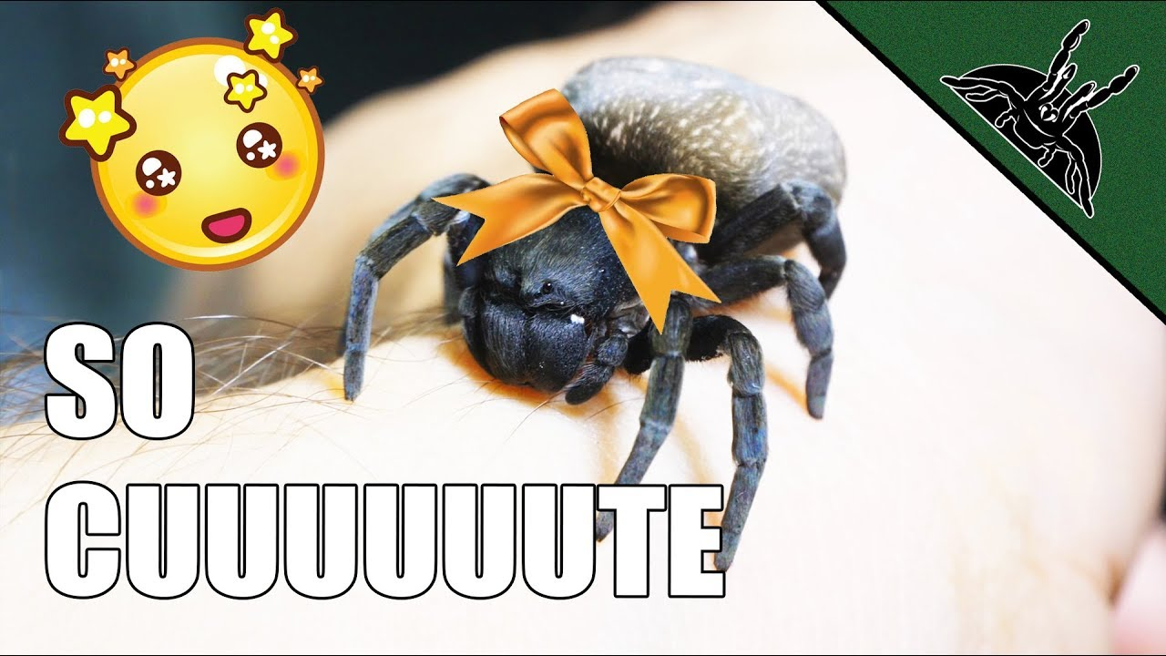 is-this-the-cutest-spider-ever-so-adorable