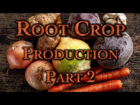 Root Crop Production Part 2