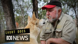 The dingo man
