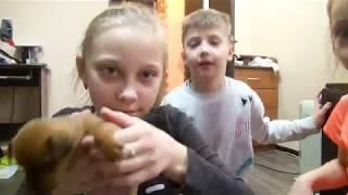 Влог! Детки и Конфетки хотят щенка! Пишите комментарии! Что делать?