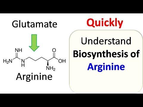 Arginine biosynthesis
