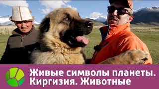 Живые символы планеты. Киргизия. Животные | Живая Планета