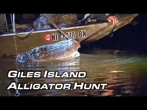 Alligator Hunting | Giles Island