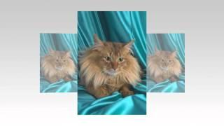 Домашние кошки.Слайд шоу из фото