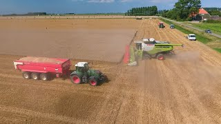 CLAAS LEXION 780 TT 12.30 m. BIG Harvest in the Netherlands