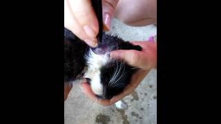 Worm in cats neck!!!!