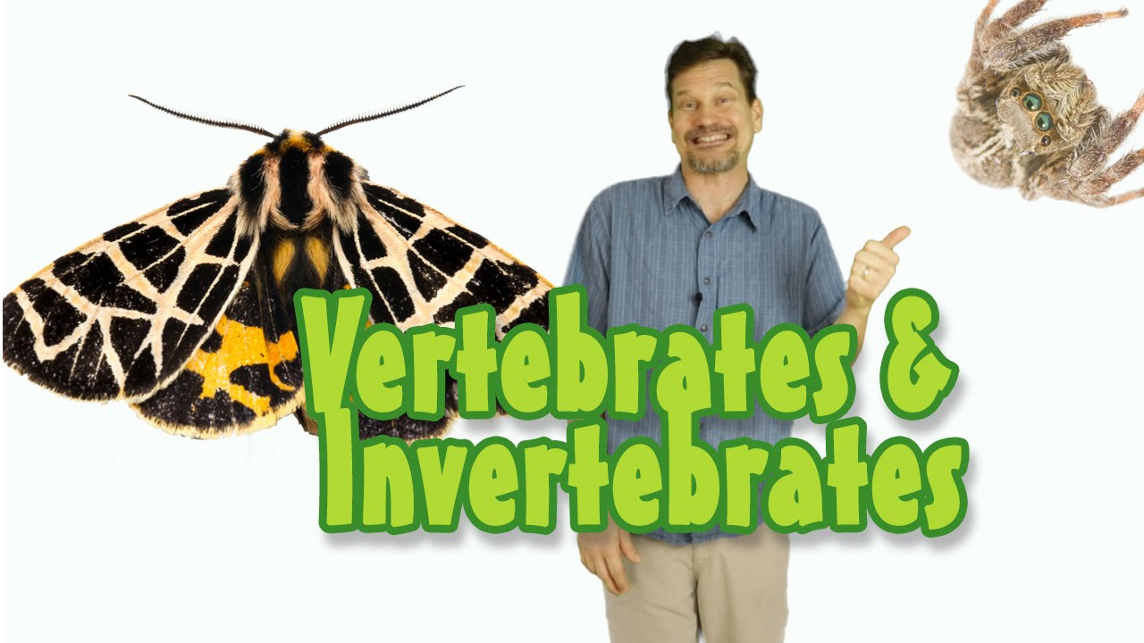 what s the difference between vertebrate invertebrate animals