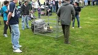 Fife Show 2009 - Quackers
