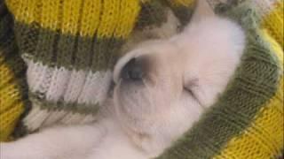 My Name Is Bond, Max Bond - A Male Labrador Retriever Life Story