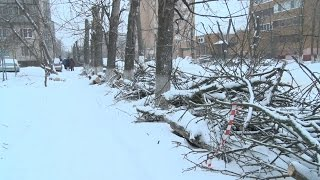 Спилить деревья - дело не хитрое(Горы бревен и веток по всей восточной стороне бросили недобросовестные подрядчики, проводившие спил больн..., 2016-12-09T14:23:05.000Z)