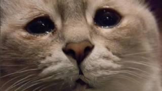 Грустный котейка поет песню!/Sad cat sings a song!