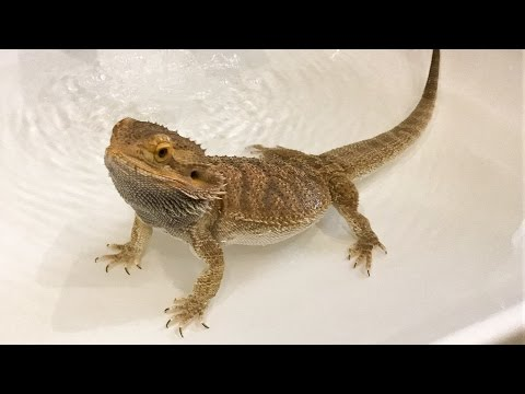 BATH TIME FOR STEEVE!
