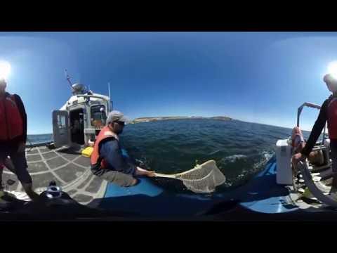 3D Video - UC Davis Pre-College Program in Coastal/Marine Sciences