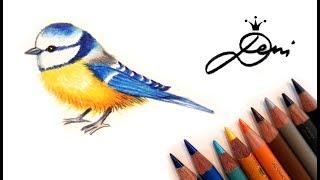 Blaumeise zeichnen lernen🐤 Wie zeichnet man einen Vogel 🐤 How to draw a bird 🐤 как се рисува птиче