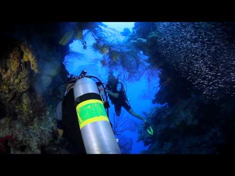 Red Lionfish Culling By Ocean Frontiers