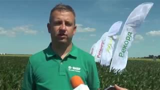 С ПРИАКСОР И КАПАЛО - чисти посеви в Кнежа