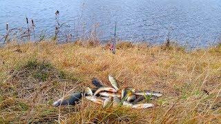 Рыбалка окуня на живца, осенью.
