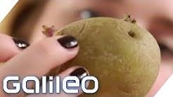 Kartoffeln: Gesundheits-Food oder Dickmacher? | Galileo | ProSieben