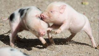 Учим животных. Детеныши животных. Мультики для малышей. Познавательное видео