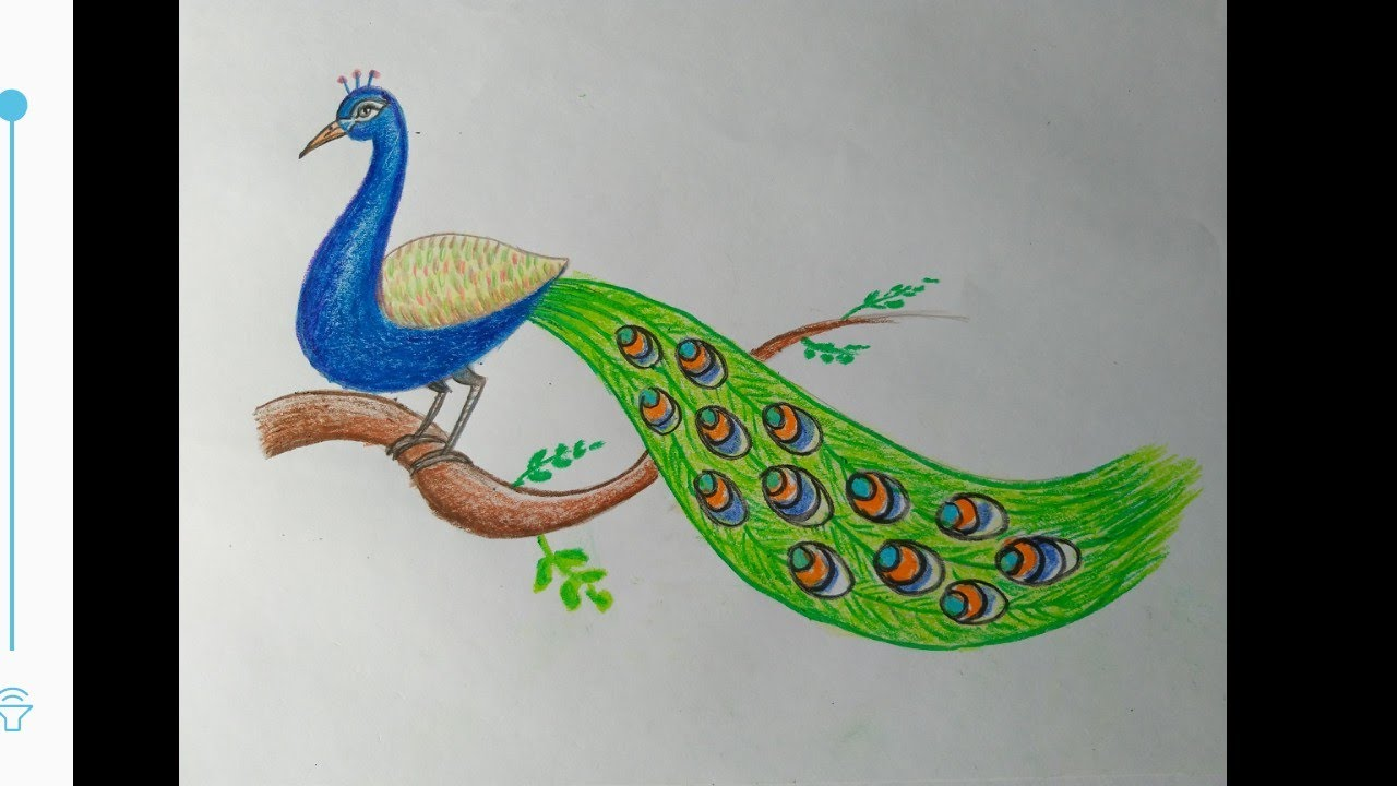 How To Make Peacock Sitting On The Branch Easy Steps Easy Peacock Drawing Realistic Peacock Youtube