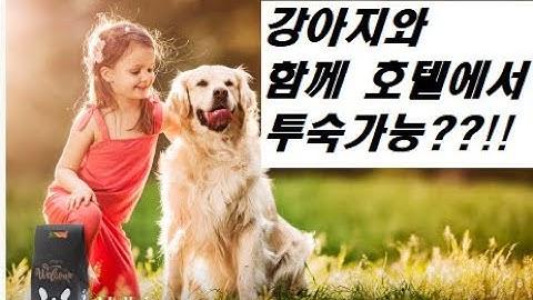 반려견과 함께 투숙 가능한 일산 소노캄 호텔(feat. 대명리조트)