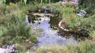 Backyard Pond - How To Build A Garden Pond