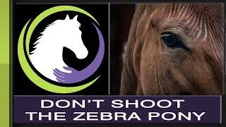 Don't Shoot the Zebra Pony