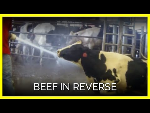 Download Youtube: Beef in Reverse