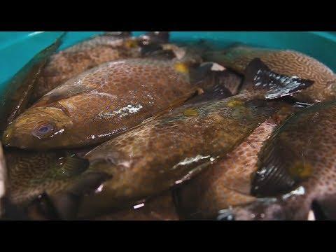 Kumita Sa Pag-aalaga Ng Rabbitfish | TatehTV Episode 21