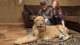 Download 'We Live With 220 Lions And Tigers' Mp3 and Videos