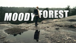 Fontainebleau - Moody Forest Adventure