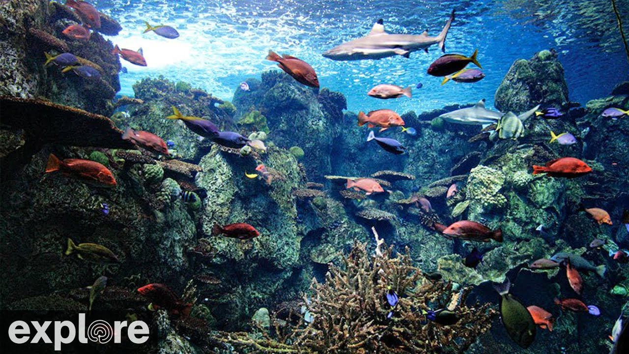 Tropical Reef Camera - live underwater video of fish & coral