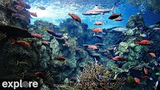 Tropical Reef Camera powered by EXPLORE.org