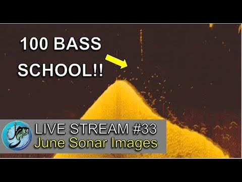 june-sonar-images-explained-|-fish-the-moment-live-stream-#33