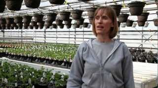 Wallish Greenhouses: What this Edmonton greenhouse does for you