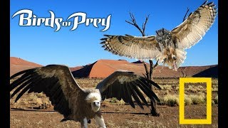 Wildlife Animals - Vultures & Owls | Formidable Birds of Prey (Nat Geo Wild)