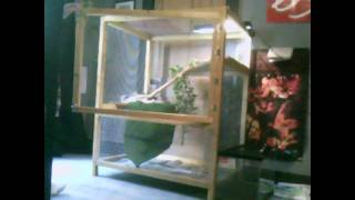 My Custom Iguana Cage, With My Baby Iguana :d