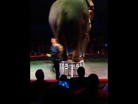 Universe circus