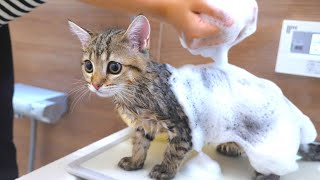 ENG) I washed my kitten for the first time!