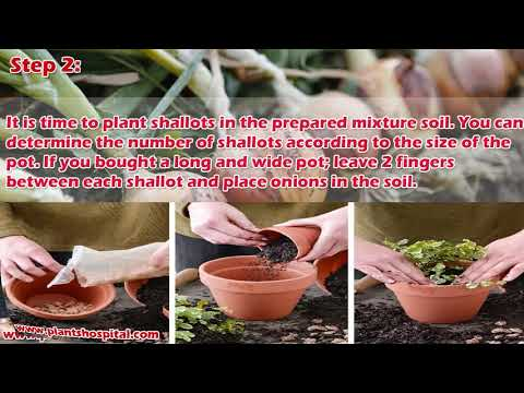 3 Easy Ways To Grow Onions At Home: 3 Steps with Pictures & Video