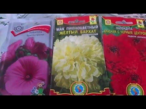 Сеем цветы разных  культур и сортов в открытый грунт без рассадным способом.