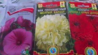 видео Эшшольция: посадка и уход, выращивание из семян, фото сортов
