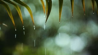 A light rain can spread soil bacteria far and wide